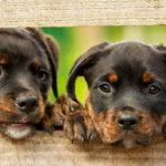 Jak wybrać psa?